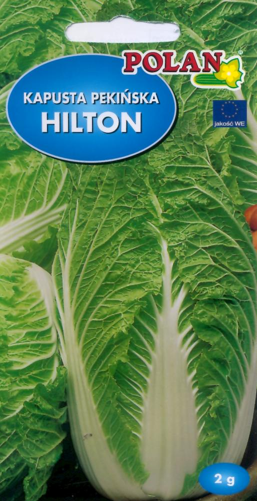 Chinese Cabbage Hilton