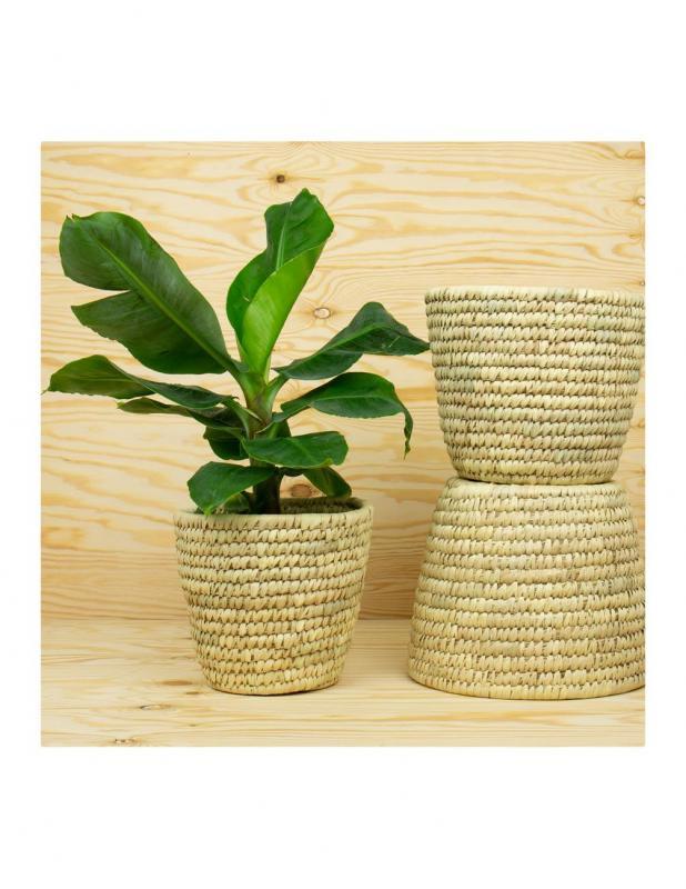 Large Palm Pot