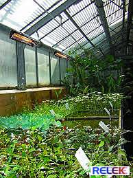 IR-värmare i ett växthus samt för odling inomhus