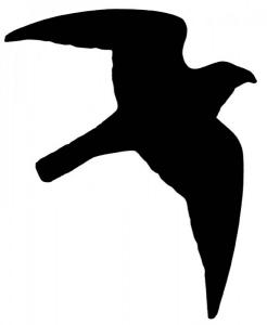 Dekal - Bird of Pray - 10st 12x17cm