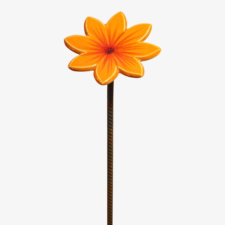 Aster Orange m.armeringspinne