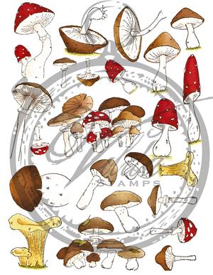 Minisvampar