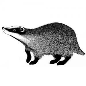 Lavinia Badger 2