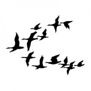 Lavinia Ducks