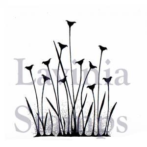 Lavinia Fairy Buttercaps