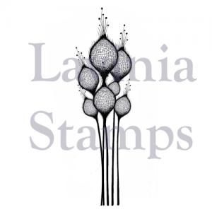 Lavinia Fairy Thistles