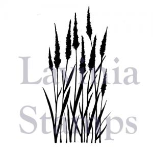 Lavinia Meadow grass
