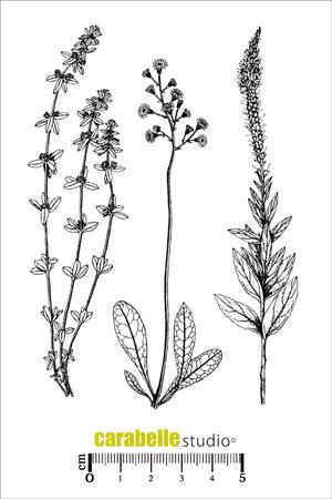 Art Stamp-Herbier 1