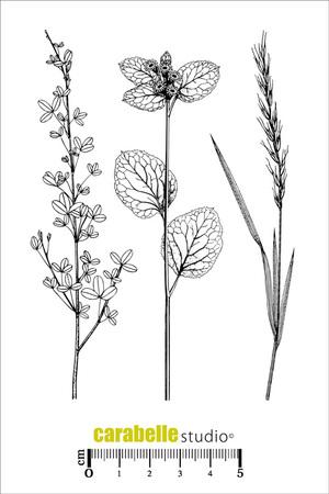 Art Stamp-Herbier 2