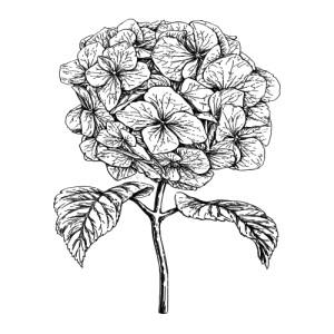 Unique Hortensiabloem