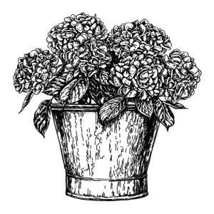 Unique Hortensia in pot