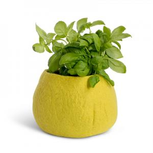 FLOWER POT, M, lime