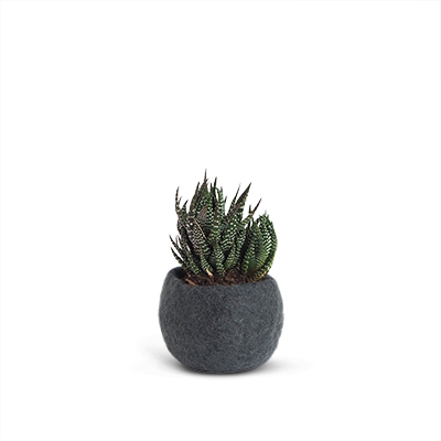 Small rounded flower pot in dark grey made of wool.