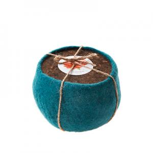 Life in a bag - Planter kit in wool flower pot - petrol