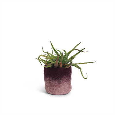 Small flower pot in aubergine made of wool with ombre effect.