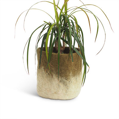 Medium size flower pot in olive green made of wool with ombre effect.