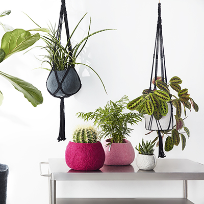 Fiddle leave and cactus in pink and grey flower pot in wool and macramé flower pot hanger.