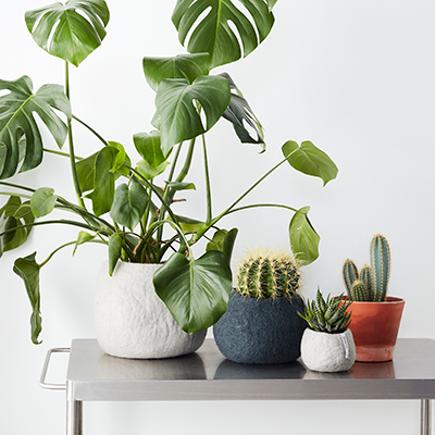 Green big plants and flowerpots in different colors and sizes in grey, dark grey and terracotta.