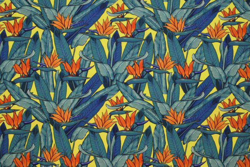 Papegojblomma gul botten