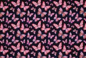 Fjärilar på blå botten