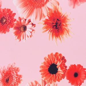 Blommor med rosa botten