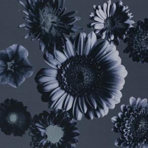 Blommor med blågrå botten