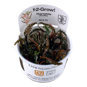Tropica Hygrophila pinnatifida 1-2-Grow!