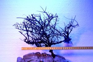 Aquascape Grim Tree 30 cm