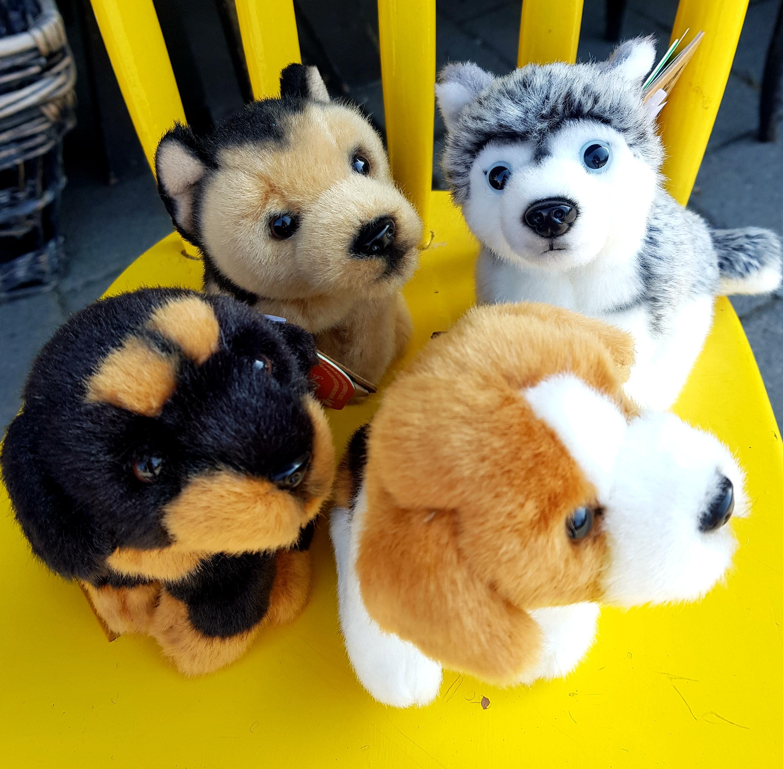 Hund - mjukisdjur