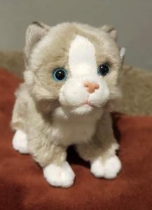 Katt - mjukisdjur