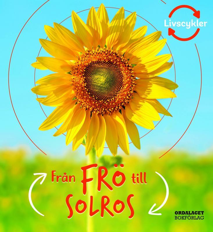 Från frö till solros