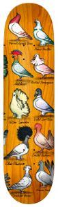 Antihero Show Pigeons Pfanner 8,06