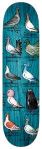 Antihero Show Pigeons Trujillo 8,5