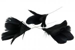 Fjädrar till riset, svart (blomma)