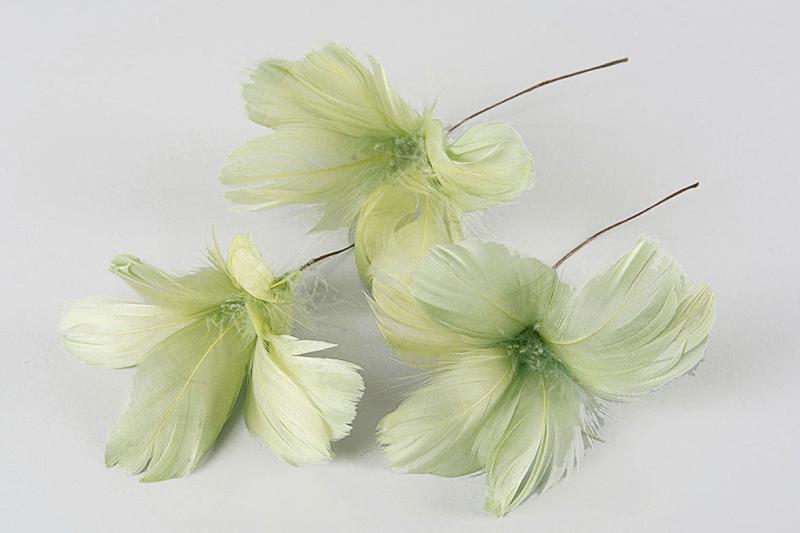 Fjädrar till riset, lime (blomma)