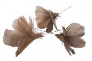 Fjädrar till riset, mullvadsfärgade (blomma)