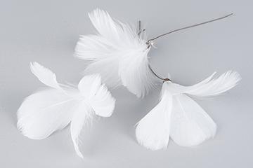 Fjädrar till riset, vita (blomma)