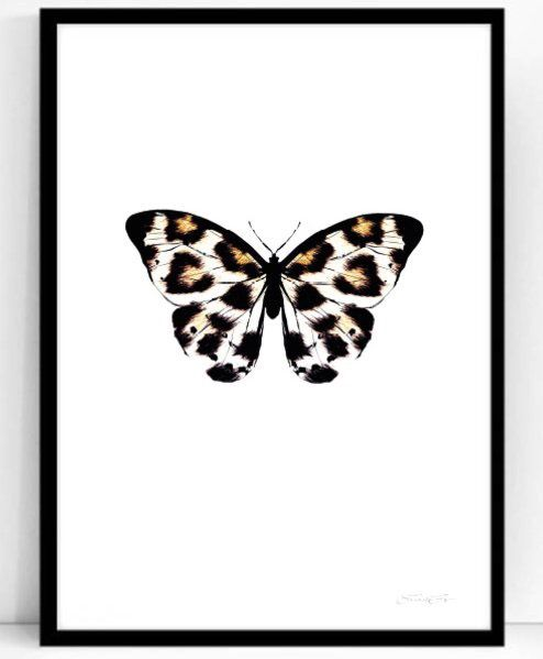 Poster - Atelje Epifor (Panthera Pardus)- 50x70