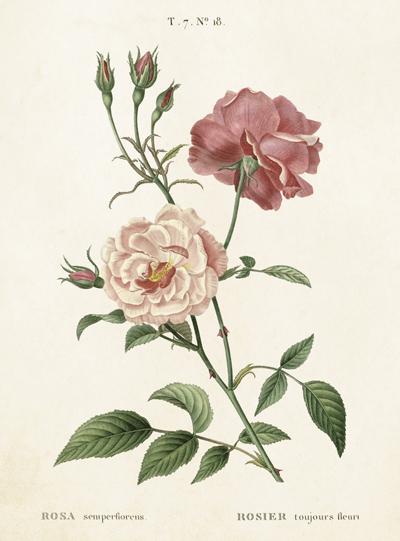 Sköna Ting, Vintage dubbelt kort (Rosa rosor)