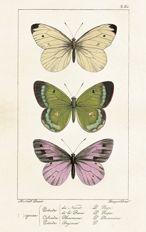 Paketkort Vintage, Sköna Ting - Fjärilar