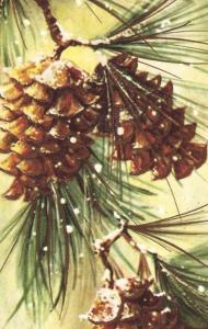 Kort från Sköna Ting - Jul - Paketkort; kottar