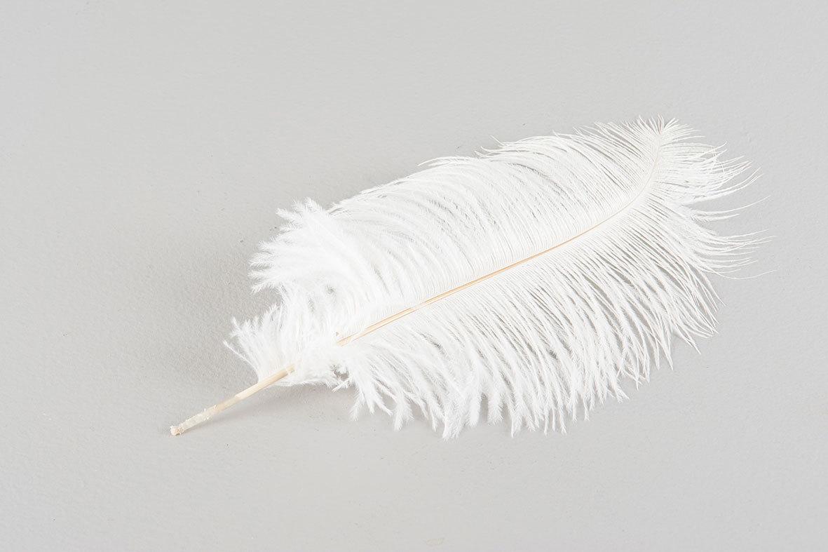Strutsfjäder, vit