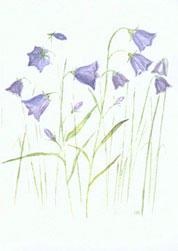 Dubbelvikt minikort i akvarell - Blåklockor