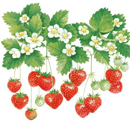 Ambiente Servetter - Summer Fruits (kaffe)