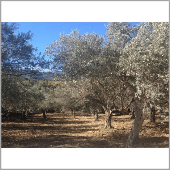 Terra Rosa Aleppotvål, Savon d'Alep med Lagerbärsolja & olivolja. Köp online från Casa Zeytin