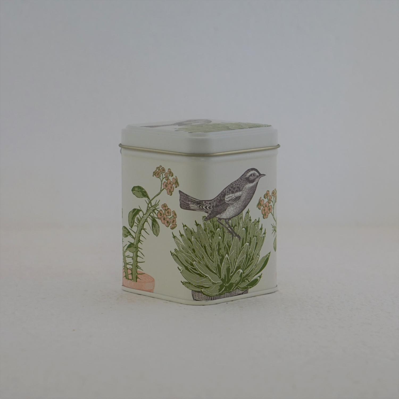 Fågeln o kaktus