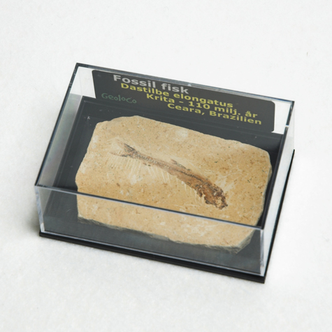 FISKFOSSIL