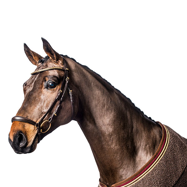 """Remonträns Eco Curved """"Horse Guard"""""""