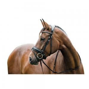 """Aachenträns Ergo """"Horse Guard"""""""