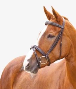 """Aachenträns Ayal """"Horse Guard"""""""